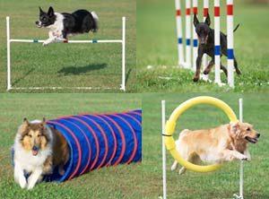 agility-dog-6